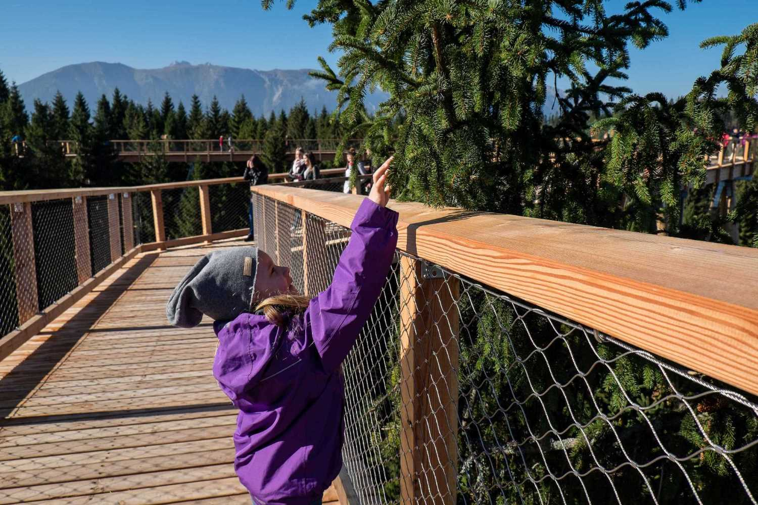 Treetop walk Bachledka | Discover the Tatras from the treetops