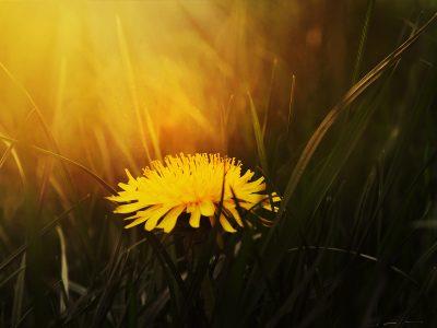 Jar, najlepšia priateľka lúk a lesov, je za rohom.